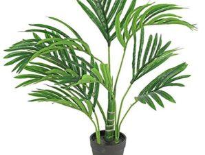 Διακοσμητικό Φυτό Σε Γλάστρα Kentia S 35x45x50cm Green Πολυαιθυλένιο
